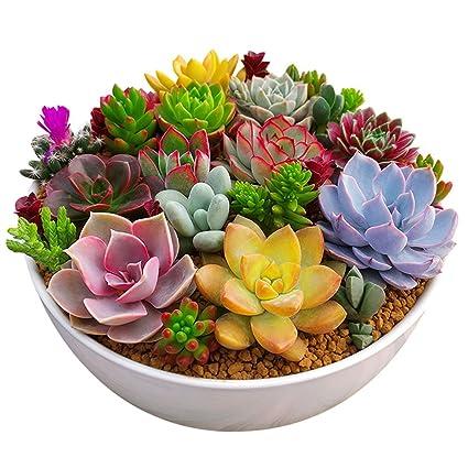 Ver fotos de plantas suculentas 94