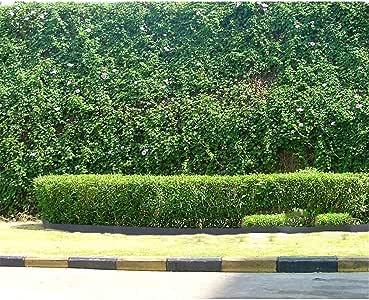 GFYWZ Bordes de césped Plástico Verde Flexible Jardín de PVC Bordes de césped Borde del Borde del Camino de Hierba para céspedes, Bordes, macizos de Flores y Piedras protegidas, 10M: Amazon.es: Hogar