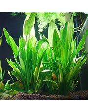 Logres - Algue verte décorative en plastique pour aquarium