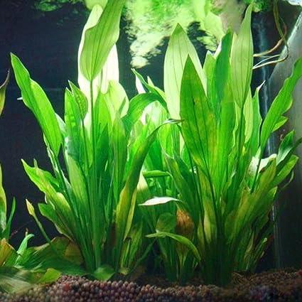Logres Adorno para acuario de pecera, de plástico, artificial, color verde