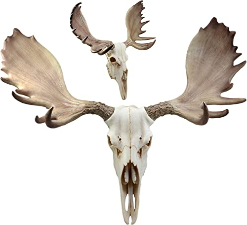 Ebros Czar North American Bull Moose Skull Wall Decor 22 Wide Wall Mount Plaque Sculpture Figurine