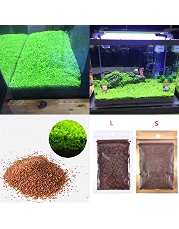 Plantas para acuario, semillas, alfombra de doble hoja, césped de agua, para