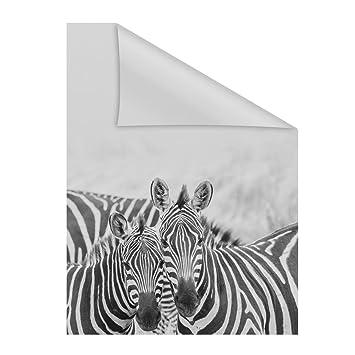 Lichtblick Fensterfolie Selbstklebend Sichtschutz Motiv Zebra