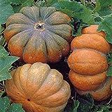 Speisekürbis - Muskatkürbis - Muscade de Provende - 5 - 10 kg - 10 Samen