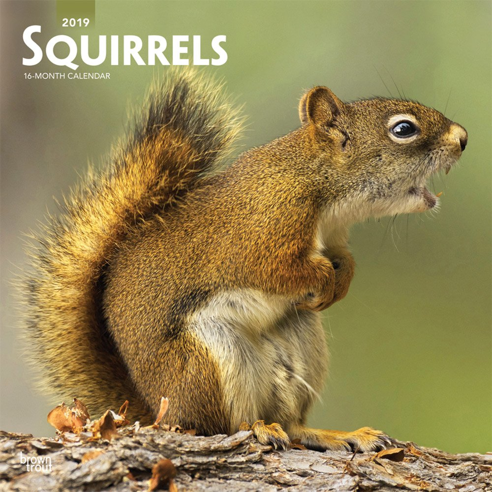 Squirrels 2019 12 x 12 Inch Monthly Square Wall Calendar, Wildlife Domestic Animals (English, French and Spanish Edition) PDF