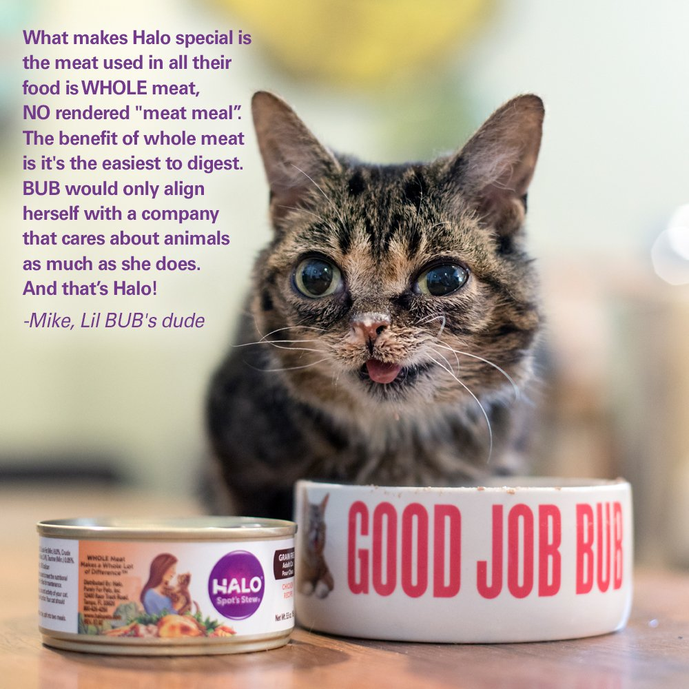 amazon com halo holistic wet cat food for kittens chicken recipe