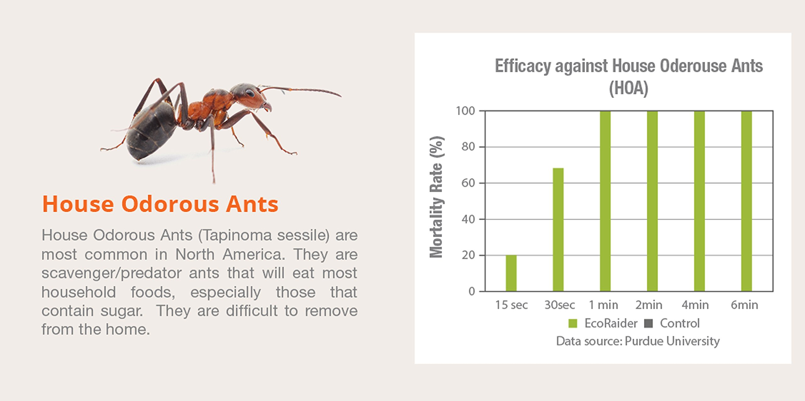 EcoRaider Ant Killer & Crawling Insect Killer (Citrus Scent) 16 OZ, Natural & Non-Toxic by EcoRaider (Image #4)