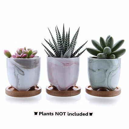 T4U 6cm Serie de Helado Moderno Suculento Cactus Flor Macetas ...