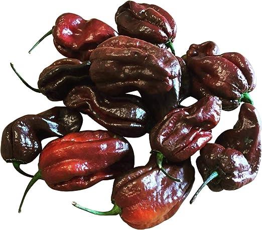 Chilisamen 15 Samen HABANERO ROT