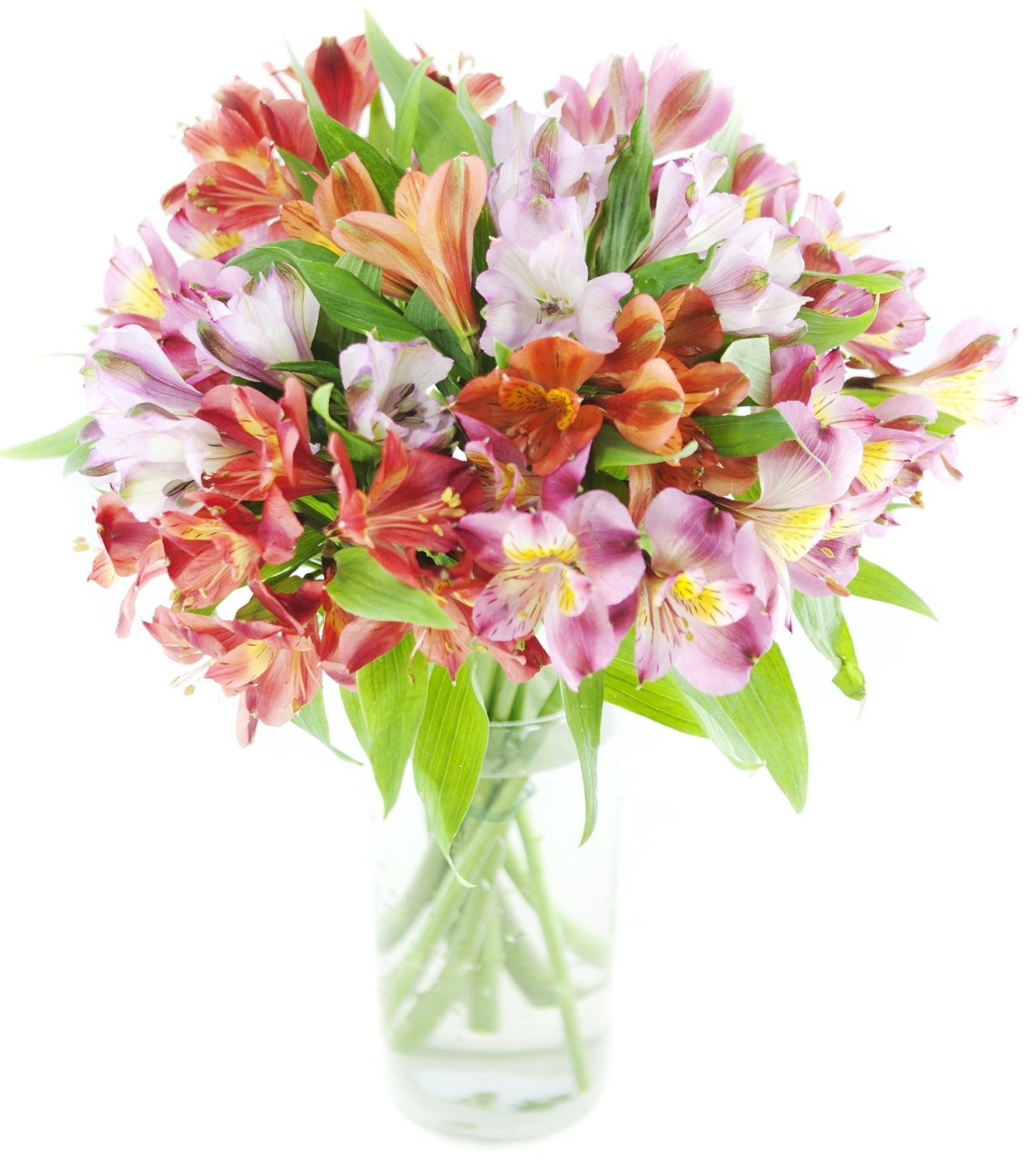 Premium Alstromeria Peruvian Lilies by Eflowerwholesale (100 blooms with Vase) by eflowerwholesale