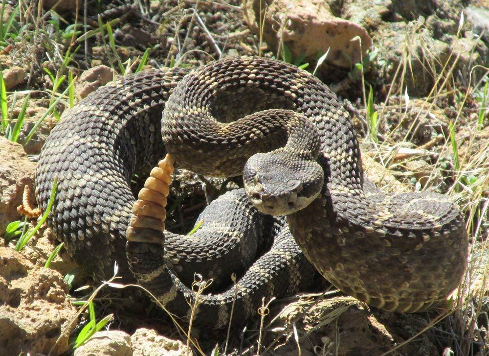 TurtleSkin SnakeArmor Snake Gaiters Khaki, Husky
