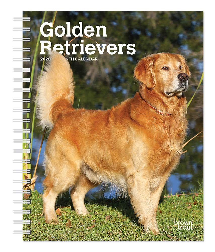 Golden Retrievers 2020 6 x 7.75 Inch Weekly Engagement Calendar, Animals Dog Breeds Retriever by BrownTrout Publishers