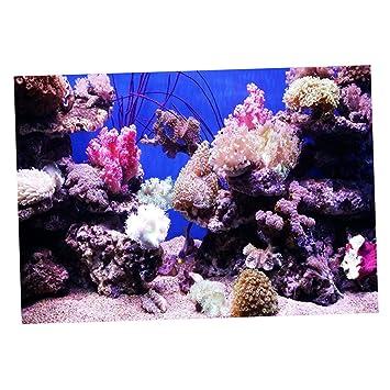 non-brand Sharplace Pecera Imagen de Fondo Complimentos Imagen HD 3D Colores Brillantes Elegante - Estilo 3, S: Amazon.es: Hogar