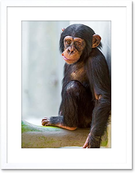 Amazon Com Animal Photo Monkey Cute Baby Chimp Framed Art Print Poster F97x11820 Furniture Decor