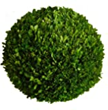 Mills Floral Boxwood Ball, 12-Inch