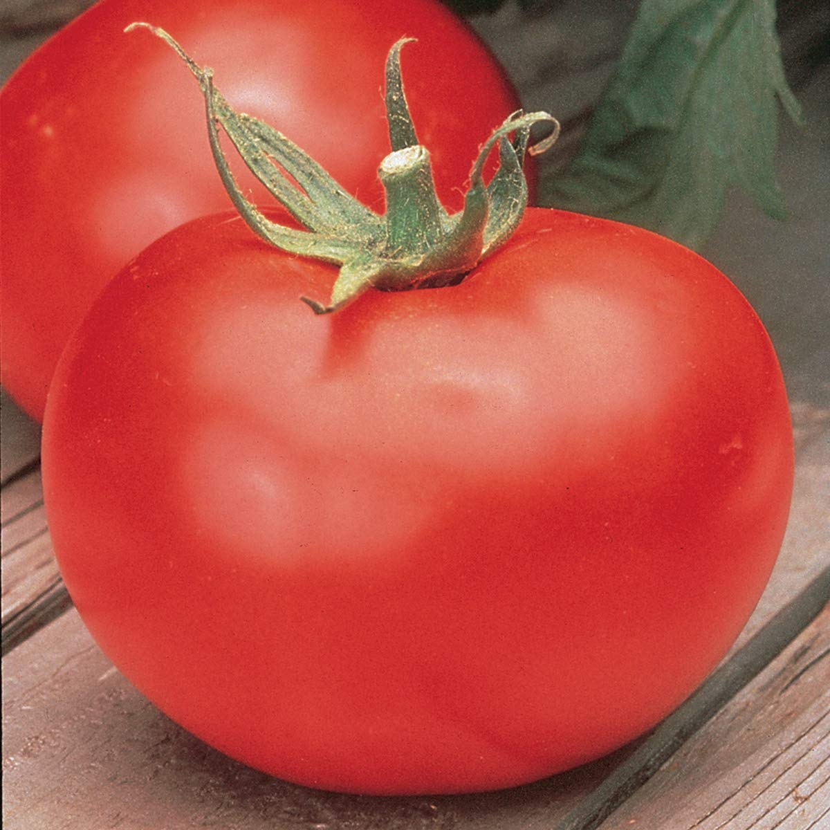 Burpee Better Boy' Hybrid Large Slicing Red Tomato, 3 Live Plants | 2 1/2'' Pot