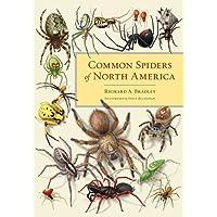 Common Spiders of North America