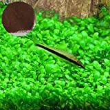 SunGrow Aquarium Grass Seeds, Creates Lush Green Carpet Plant, Native Ecosystem for Fish, Fast and Easy Propagation, Ideal for Beginners and Pros, Minimal Maintenance