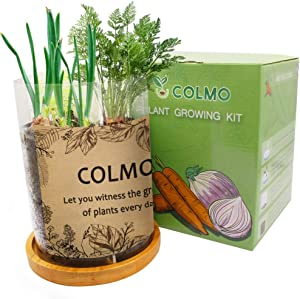 COLMO Herb Garden Kit - Indoor Herb Garden Starter Kit Gardening Kit with 2 Types Onion Carrot Planting Pots & Potting Soil Non GMO DIY Home Planting Kit (Clear)