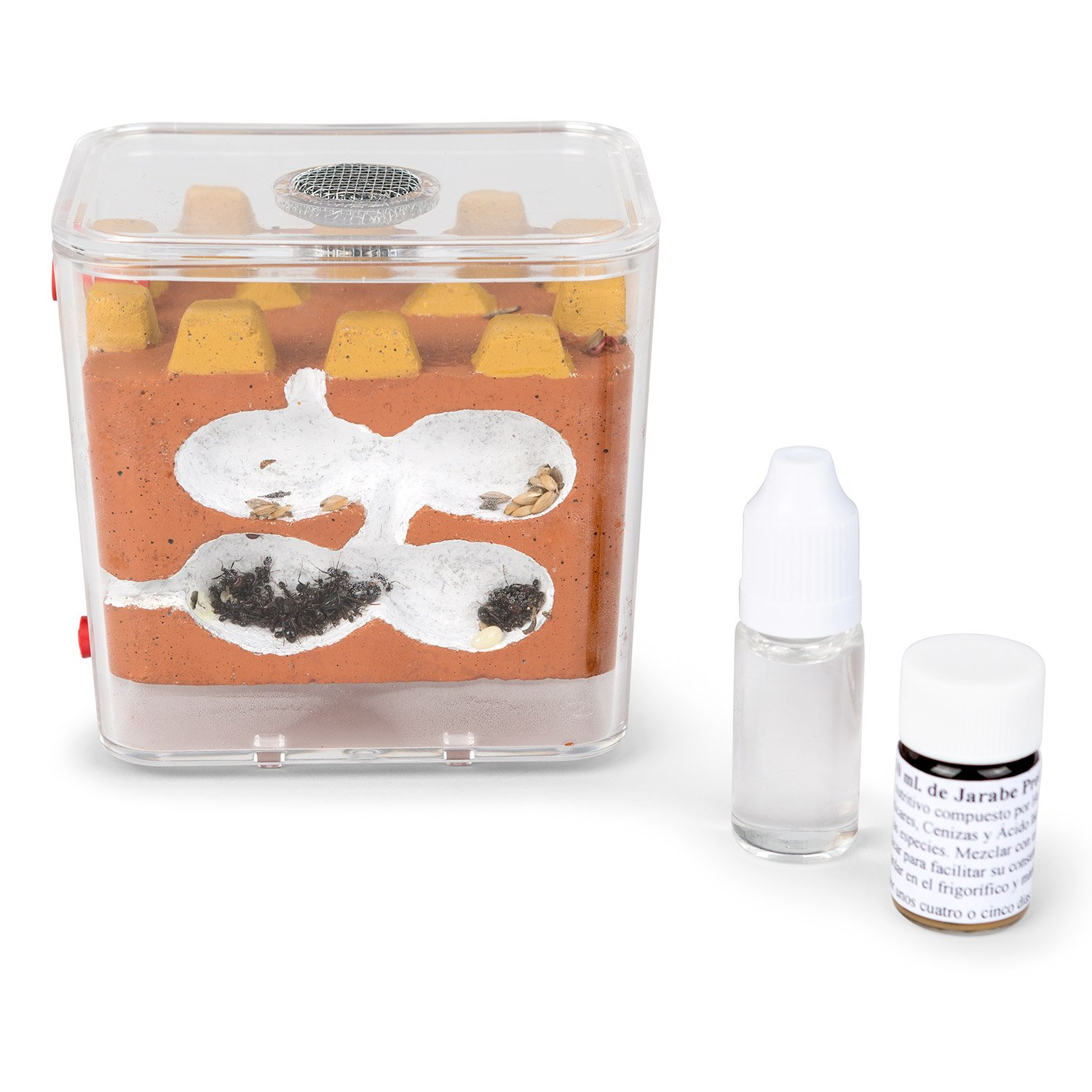 Ant Farm Biorama Kit (Free Ants with Queen) AntHouse