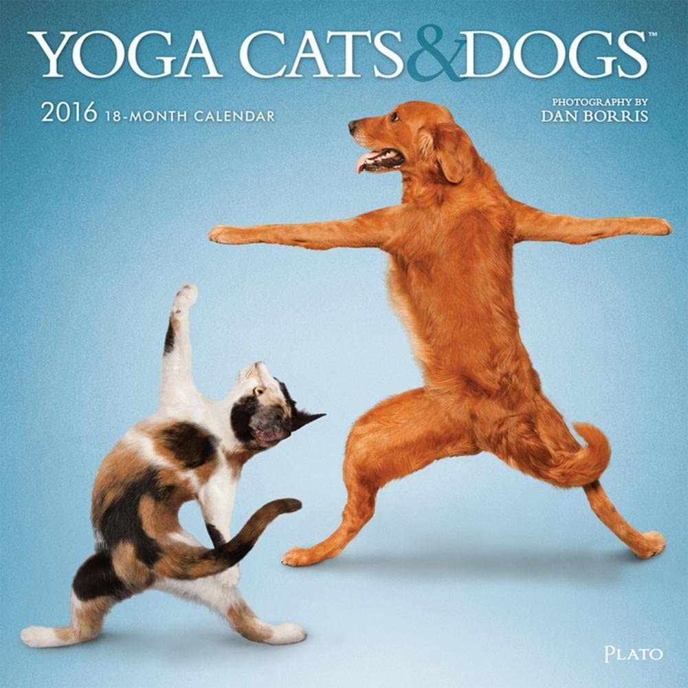 Yoga Cats and Dogs - 2016 Calendar 12 x 12in