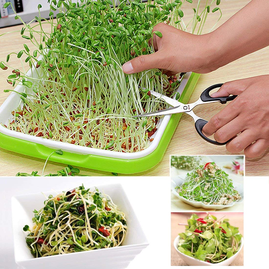 Wheat Grass Useful for Growing Fodder Plants and Hydroponic Growing Seed Germination Tray Nursery Tray for Seedling Good Work at Starting Seeds Sprouting Peerless Seedling Trays Sold