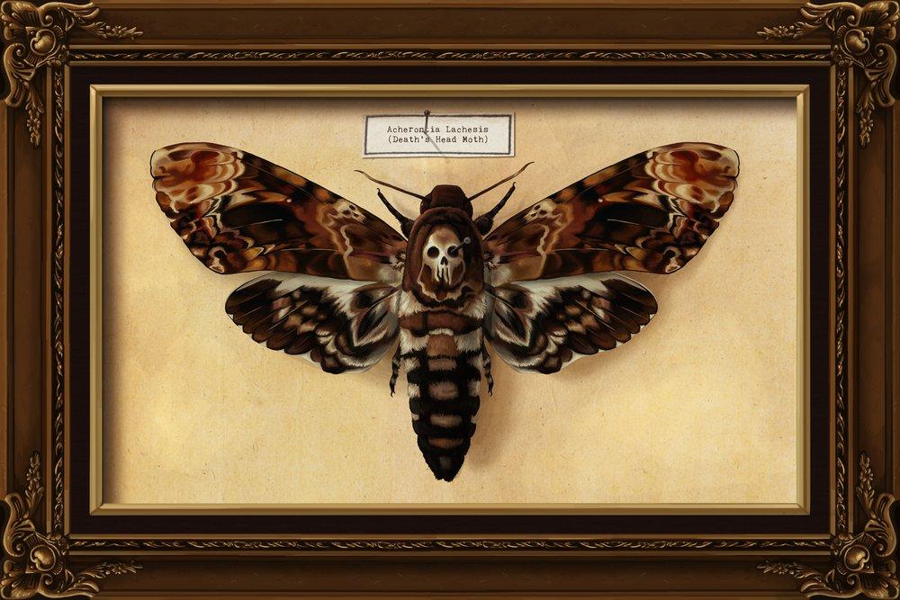 Death's Head Moth (9x12 Art Print, Wall Decor Travel Poster)