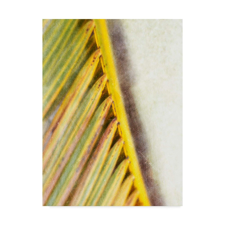 14x19Inch Trademark Fine Art Frond Study I Wall Decor by Emily Robinson, 14x19