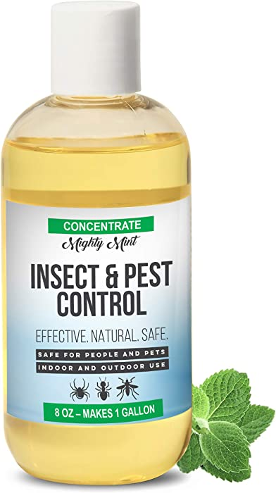 The Best Natural Pest Control For Home