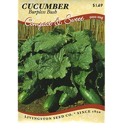 - Burpless Bush Cucumber - 25 Seeds-GARDEN FRESH PACK! : Vegetable Plants : Garden & Outdoor