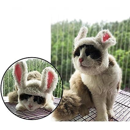 YIFANFENGSHUN Gato León Panda Mickey Bunny Mane Peluca Gato Traje Sombrero Gato Mascota Cachorro Peluca Cosplay