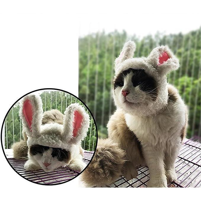 YIFANFENGSHUN Gato León Panda Mickey Bunny Mane Peluca Gato Traje ...