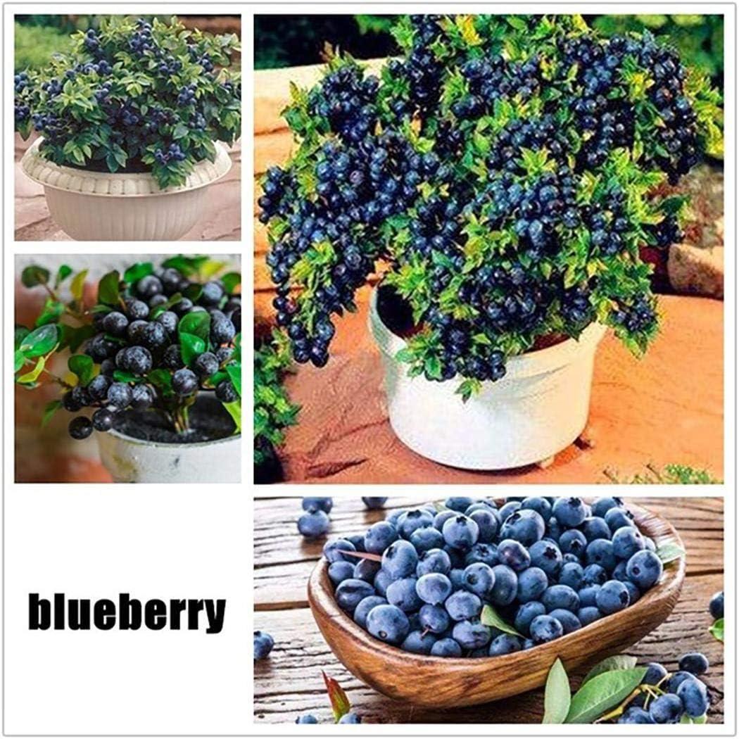 Blackberry Seeds Nutritious Fruits Bonsai Seeds Outdoor Delicious Fruit Plant Garden Balcony Decor Bonsai Home Garden Courtyard Plant 100pcs Plants Seeds Bulbs Garden Outdoors