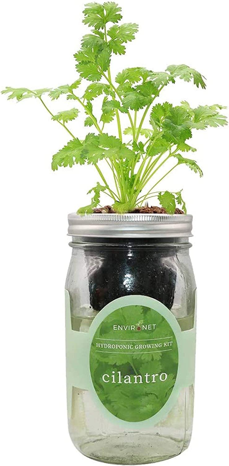 Environet Hydroponic Herb Growing Kit, Self-Watering Mason Jar Herb Garden Starter Kit Indoor, Grow Your Own Herbs from Seeds (Cilantro)
