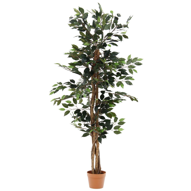 不二貿易 観葉植物 パキラ スタンダード 高さ172cm グリーン 52666 B071YZ8SFG パキラ/172cm