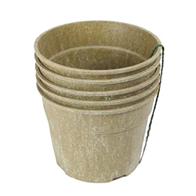 "Barn Eleven Biodegradable Starter Pots for Seedlings Cuttings and Plants, 6"": Health & Personal Care"