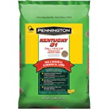 Kentucky 31 Tall Fescue Grass Seed - 50 lbs Covers up to 10,000 sq ft