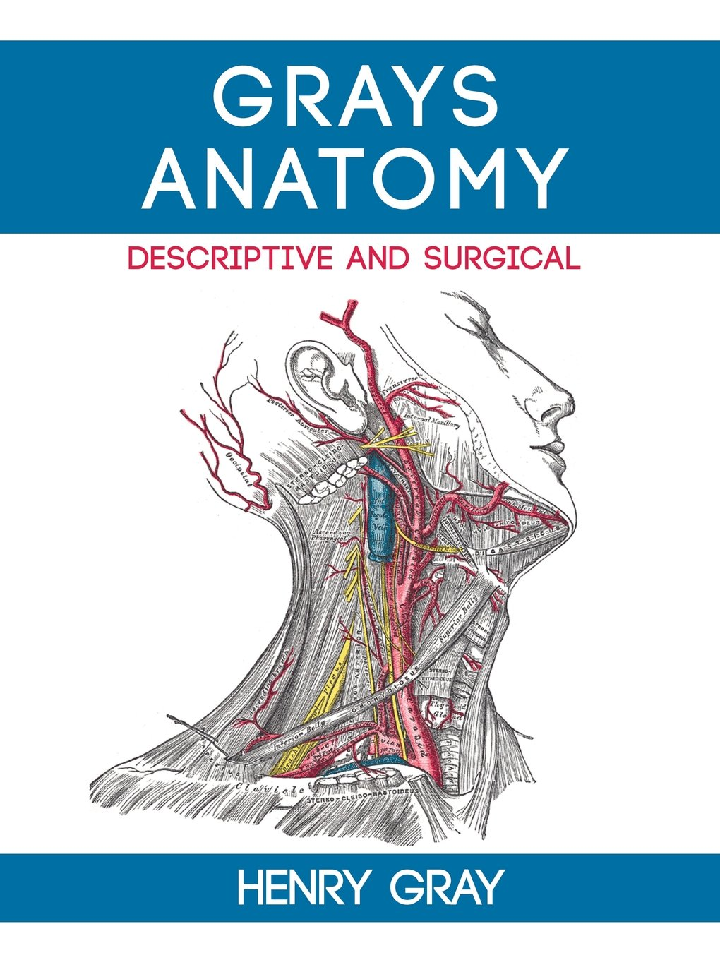 Grays Anatomy Descriptive And Surgical Henry Vandyke Carter Henry