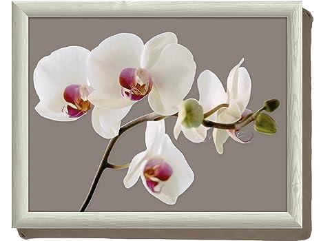 Amazon.com: Creative Tops Orquídea Harmony Puf Cushion Lap ...