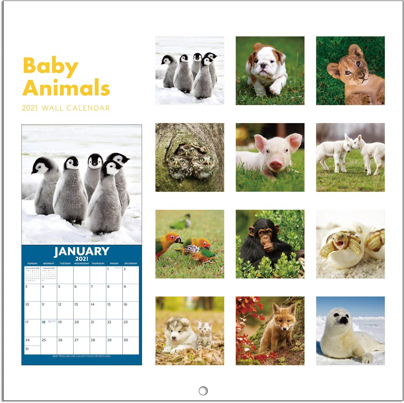2021 Calendar Baby Animals Wall Calendar 2021 With Thick Sturdy Paper 12 X 12 Inches 12 Months January 2021 December 2021 Amazon Co Uk Office Products