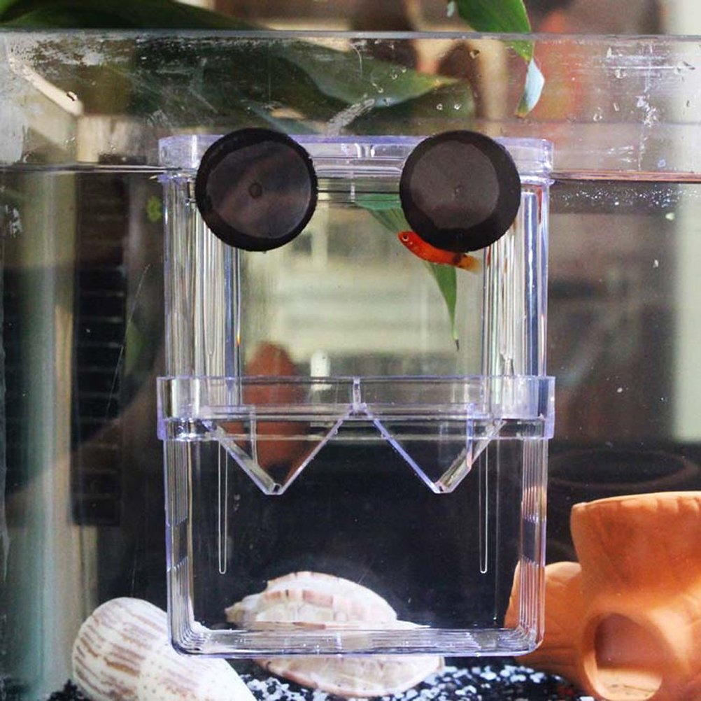 LEORX Peces de acuario incubadora flotante criadero criador Case de cría (Transparent): Amazon.es: Bricolaje y herramientas