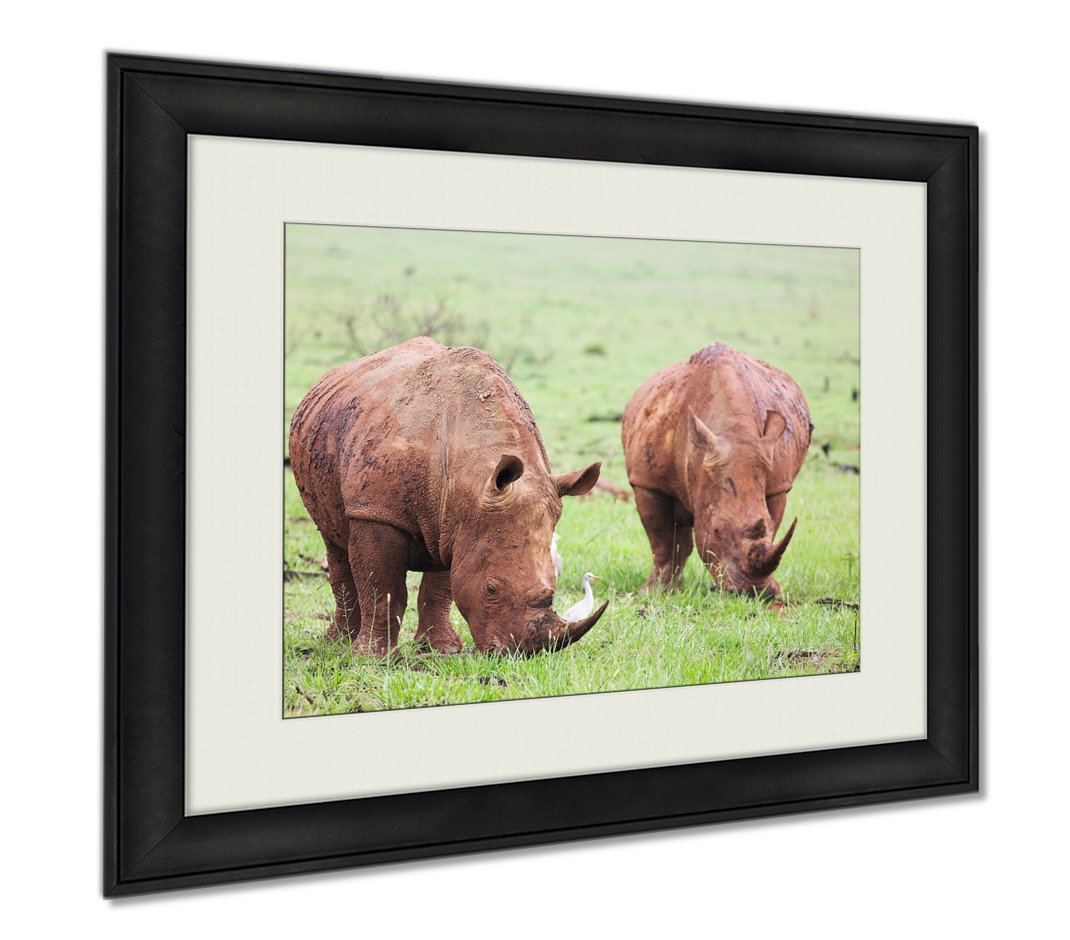 Ashley Framed Prints Mud Encrusted Rhinoceros Eating Green Grass On A Rainy Day, Wall Art Home Decoration, Color, 30x35 (frame size), AG5547631