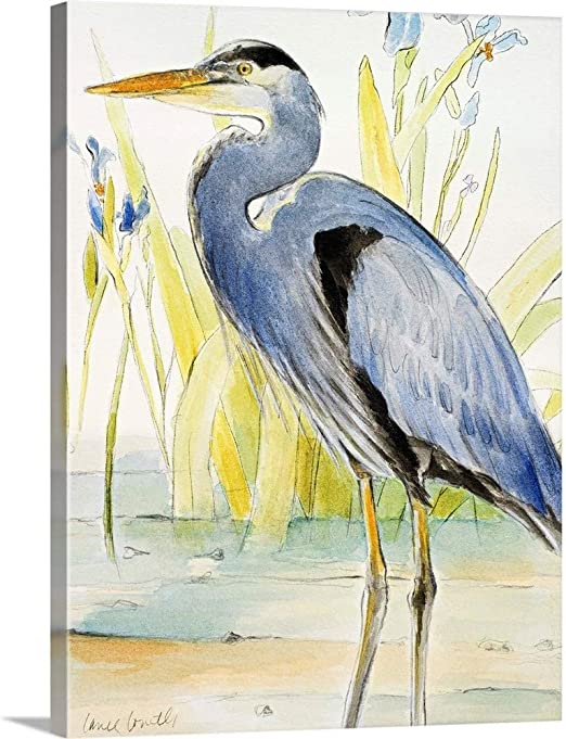 Amazon Com Great Blue Heron Canvas Wall Art Print 18 X24 X1 25 Posters Prints