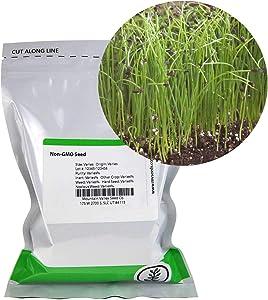 Garlic Chives Herb Garden Seeds - 1 Lb - Non-GMO, Perennial Herbal Gardening & Microgreens Seed - Allium tuberosum