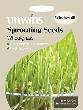 Semillas germinadas de agropiro de Unwins, 800 semillas: Amazon.es ...