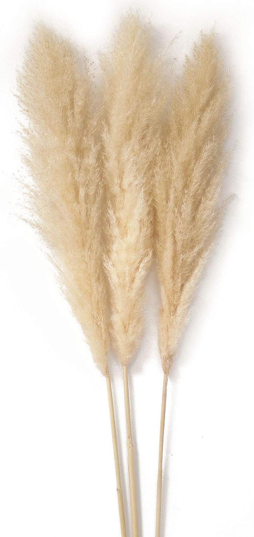 Pampas Grass Large 3 Stems 48