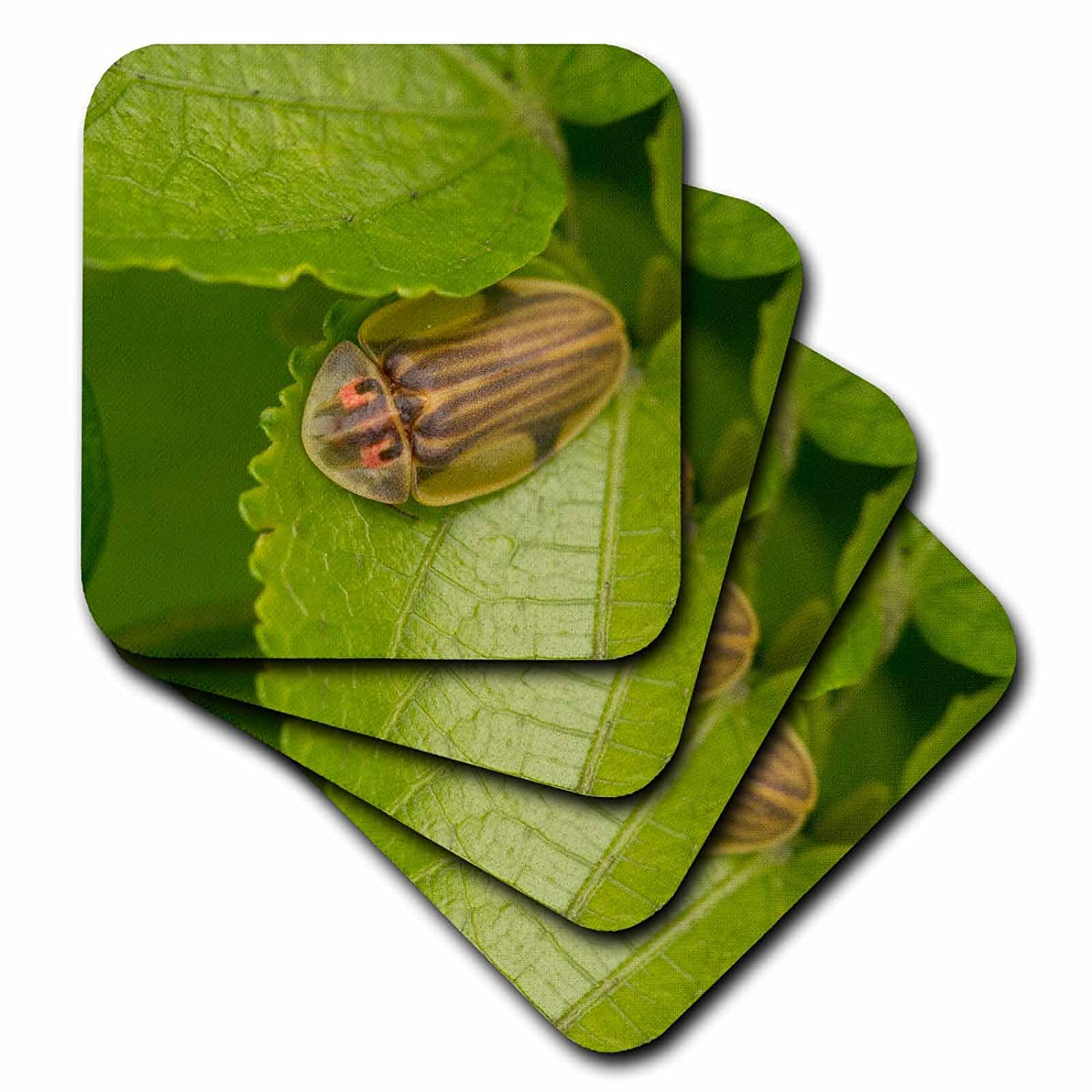 Costa Rica Rob Sheppard 3dRose cst/_87271/_1 Tortoise shell beetle insect Soft Coasters SA22 RSP0022 Set of 4