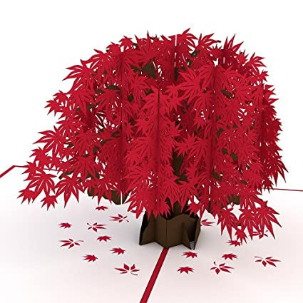 Amazon Lovepop Japanese Maple Pop Up Card 3D Tree Nature Foliage Birthday Office Products