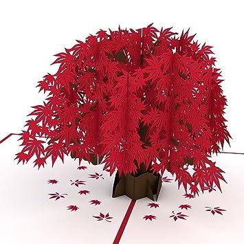 Amazon.com: Lovepop - Tarjeta de arce japonés, tarjeta 3D ...