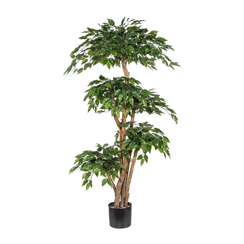 Wohnfuehlidee Kunstpflanze Ficus Ficus Ficus Benjamini grün, mit Naturstamm, im Topf, Höhe ca. 170 cm 646faa